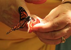 Monarch butterfly three part program coming soon. Starts April 13. Watch at jmu.edu/arboretum for information to post soon