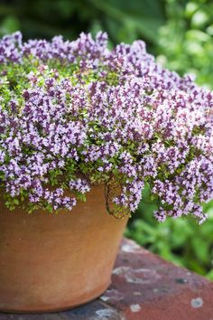 """Who doesn't get an awesome sense of accomplishment from picking their own herbs? According to Modern Pioneering author Georgia Pellegrini, thyme, with its small flower blossoms, is a great option. """"Thyme grows well in pots, even upcycled coffee tins, which can be perched on a kitchen windowsill,"""" says Pellegrini. """"That way, it's at your fingertips while cooking."""" RELATED: 22 New Ways to Landscape Your Yard"""