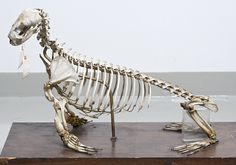 seal skeleton - Google Search