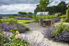 Sweeps of catmint and roses create calming landscape. Acres Wild Design.