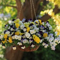 Pansy Cool Wave Select Planted Hanging Basket amazon 2 for £30