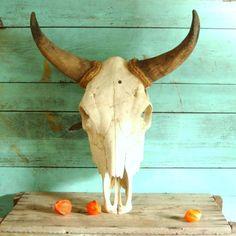real bull skull - Google Search