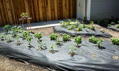 Home & Family - How-To - More Planting Tips | Hallmark Channel Family Channel, Hallmark Homes, Gnome Garden, Lawn And Garden, Home And Garden, Home And Family Tv, Home And Family Hallmark, Homestead Gardens, Family Garden