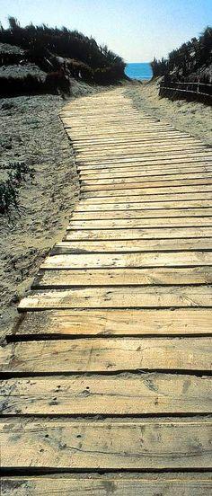 Camí a la platja entre dunes - Parc Natural de l'Albufera, València. Espanya.
