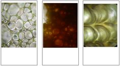 STRIKKS inspired by microscopic images. See our board 'STRIKKS experiments' for knitted samples!