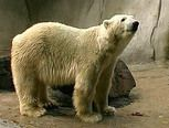 De ijsbeer, school tv