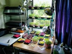 Our vertical microgreen farm ...