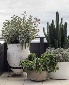 Oh, how much do we want to spend our summers here in this paradise! 🌿 We were called in to help transform this coastal haven in Sydney's… Patio Plants, Indoor Plants, House Plants, Potted Plants, Outdoor Pots, Outdoor Gardens, Outdoor Living, Pot Jardin, Outdoor Landscaping