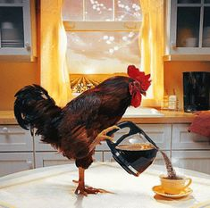 The perfect Rooster Morning WakeUp Animated GIF for your conversation. Discover and Share the best GIFs on Tenor. Gif Café, Animated Gif, Tag Youtube, Foto Gif, Les Gifs, Good Morning Good Night, Good Morning Gif Funny, Good Morning Coffee Gif, Good Morning