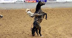 Coors Cowboy Club Ranch Rodeo this weekend in Amarillo, Tx. June 3-4