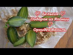 Блог ирина орхидеи на ютубе