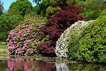 Sheffield Park Garden - Wikipedia, the free encyclopedia