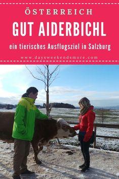 Gut Aiderbichl in Salzburg - Ein tierisches Ausflugsziel Angels And Demons, Places To Go, Germany, Animals, Angels, Europe, Road Trip Destinations, Hiking, Viajes