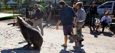 Nim's Gallery - Return to Nim's Island: Animal trainers work with sea lion on set.