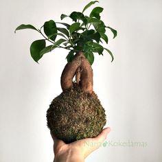 ¡Pon una Kokedama en tu vida! Kokedamas  Diseños originales Regalos originales Naturaleza Ecofriendly Interiorismo Decoración