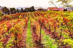 After the grape harvest by Francesco Cetta on 500px