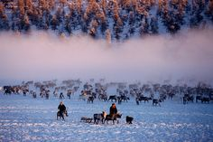 E'ven herders with their reindeer at their winter pastures near Verkhoyansk. Yakutia, Siberia, Russia.  © Bryan & Cherry Alexander Photograp...