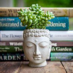 Verde na cabeça! Vasos para plantas + Pesquisa de Mercado + Street Art