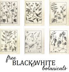 (Free) Black And White Botanical Art - Emily A. Clark