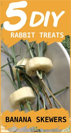 skewering little slices of banana with strands of hay can be a great way to encourage your rabbit to eat more hay while also giving them a yummy treat! Rabbit Diet, Rabbit Eating, Pet Bunny Rabbits, Baby Bunnies, Rabbit Toys, Pet Rabbit, Homemade Rabbit Treats, Bunny Cages, Rabbit Cages