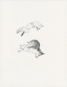 Lauren Nassef - Illustration - A fox and a wolf in black and white
