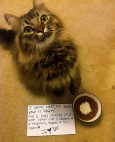 27 Hilarious Cat Confessions. (You notice it isn't called cat shaming because unlike dogs, cats just don't care!) I am glad I am not the only one who calls my beloved little fur babies A--holes! Must read for cat owners. Nina does this everyday