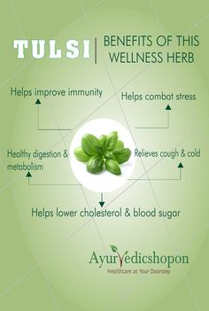 Tulsi an effective adaptogen plant, which adapts to body stress and also improves immunity. Try our tulsi products like Tulsi teas with various flavours, Tulsi capsules, Tulsi powders www.ayurvedicshopon.com #ayurveda #ayurvedicshopon # greentea #herbaltea