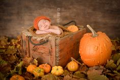 newborn baby boy sleeping in wooden crate with pumpkins photographed by San Francisco newborn photographer Sarka Trager