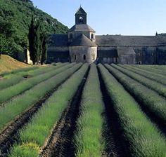 Conservatory Lavender Farm, Vaucluse, France   La ferme aux lavandes, route du mont-ventoux, 84390