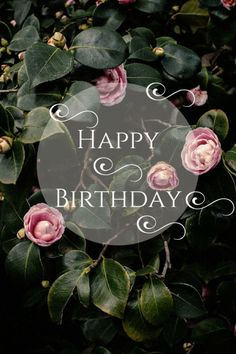 Happy Birthday! Click for more pins!
