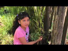 DICCIONARIO DE PLANTAS MEDICINALES MAPUCHE - YouTube