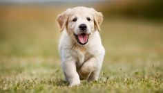 Welk type hond past er het beste bij jou volgens je sterrenbeeld? - CosmopolitanNL