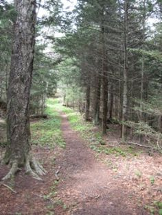 Sugarland Mountain Trail-7 Miles Roundtrip-Access from Clingmans Dome Road in the Smokies!
