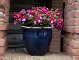 Fuchsia Plant, Tropical Garden, Container Gardening, Planter Pots, Vase, Flowers, Plants, Balcony, Compact