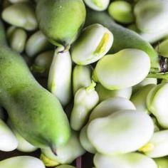 Fève : semis, culture et récolte des fèves