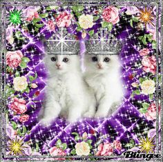 Cute Cats And Kittens, Kittens Cutest, Beautiful Cats, Beautiful Flowers, Valentines Day Cartoons, Cute Good Morning, Puppy Images, Animation, Christmas Cats