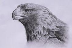AGUILA - Imágenes de Animales en Temática General | Dibujando