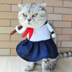 Pet Dog Cat Costumes High School Uniform Cosplay Suit Pet Apparel Halloween Christmas Clothes For Puppy Dogs Costume for a cat Pet Halloween Costumes, Pet Costumes, Halloween Cat, Halloween Christmas, Cat Lover Gifts, Cat Gifts, Cat Lovers, Pet Dogs, Dogs And Puppies