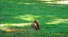Eichhörnchen auf der Wiese - Jahreszeiten - Galerie - Community