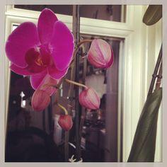 Terza fioritura