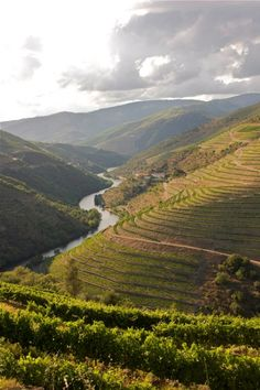 Quinta do Panascal in the Douro Valley. #Portugal