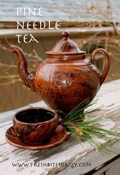 """Pine needle tea and other recipes from our adventures on """"The Lost Road"""""""