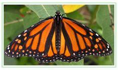 """Butterflies & Blooms"" Butterfly Conservatory at Blue Willow Garden & Landscape Design Centre Garden Landscape Design, Garden Landscaping, Willow Garden, Interior Design And Construction, Zoos, Garden Supplies, Family Kids, Conservatory, Central America"