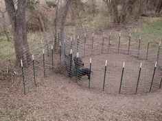 How To: Build a good hog trap under $50