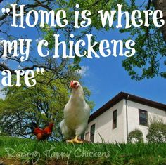 Chicken Quotes, Raising Chickens, Chickens Backyard, Be Yourself Quotes, Funny Quotes, Hilarious, Humor, Metals, Cricut