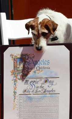 Uggie gets his paw prints at the Chinese Theatre!
