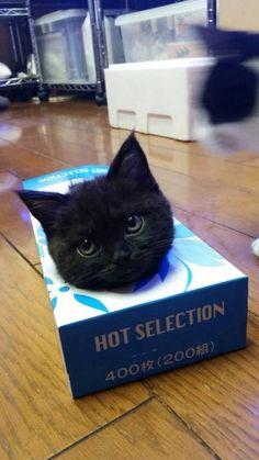 Cat In A Box #Funny
