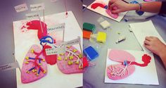 Art and anatomy project. There are many ways Art and Science can work together at school, and this is one of our experiments. Second year pupils at Collegio Villoresi were given the task of represe...