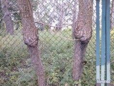 http://www.administrator24.info/blog/id8,drzewa-wrosniete-w-plot