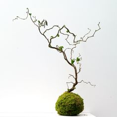 Kokedama Ball Ideas (A Guide How to Make & Plant Care Unique Kokedama Ball Ideas for Hanging Garden PlantsUnique Kokedama Ball Ideas for Hanging Garden Plants Hanging Plants Outdoor, Hanging Planters, Plants Indoor, Garden Beds, Garden Plants, Art Floral Japonais, Japanese Plants, String Garden, Plant Cuttings